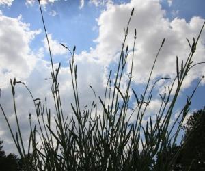 Tıbbi Aromatik Bitkiler, Alternatif Ürün Yetiştirmede Üretim Sembolümüz, ''Lavanta'' Bahçelerimiz